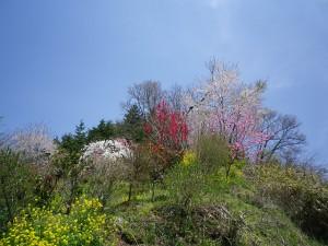 2010年5月初旬 福島県二本松市のとある春景色
